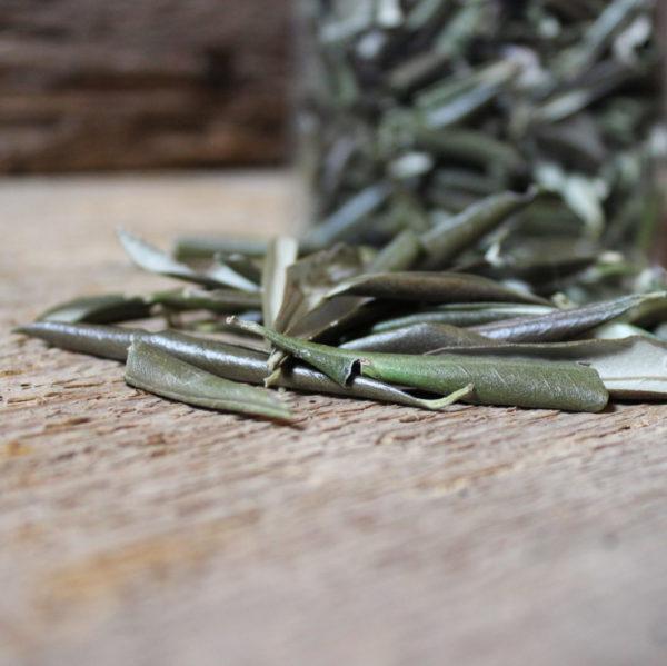Infuso foglie di olivo 2